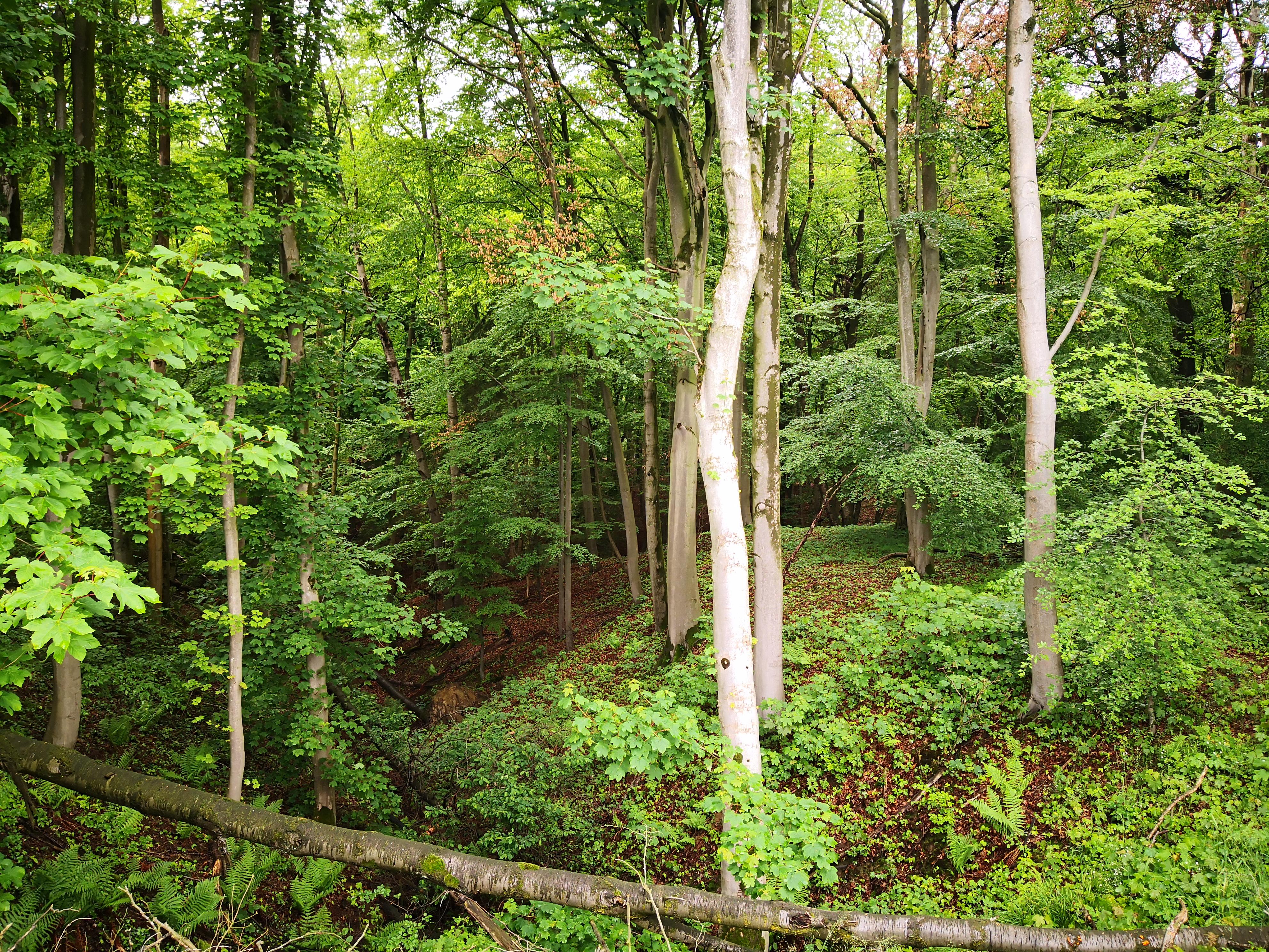 Mehr Bäume braucht das Land! Und Voerde erst recht…
