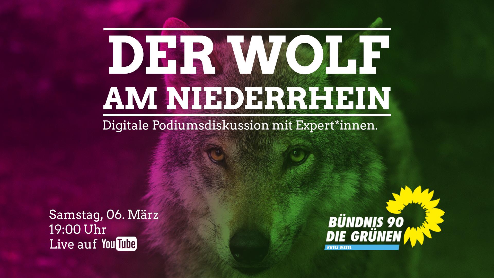Der Wolf am Niederrhein